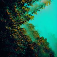 POLYMOON - CATERPILLARS OF CREATION (TURQUOISE vinyl LP)